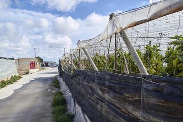 Plastic greenhouses at El Ejido