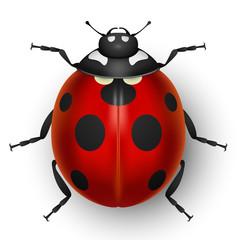 Red cute ladybug isolated on white