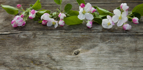 Beautiful wooden background with Apple flowers