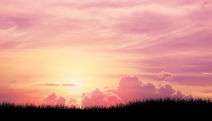 Silhouette grass in Pink purple sky cloud background
