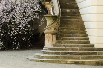 Keuken foto achterwand Kasteel Staircase of a castle in Prague with blossoming tree
