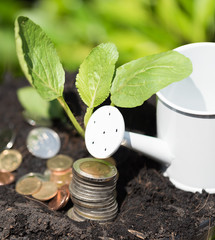 The investment is worth the attention,Green plant grow out of soil and golden coins ,investment and saving money concept