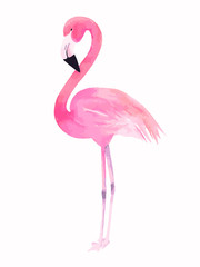 Watercolor pink flamingo. Vector illustration