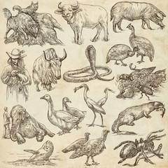 Animals around the World - An hand drawn full sized pack. Line art.