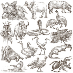 Animals around the World - An hand drawn full sized pack. Line art.