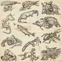 Animals in action, Predators - An hand drawn full sized illustrations. Collection on white.