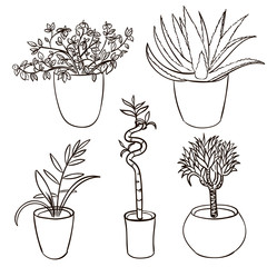 Set of house plant isolated. Vector sketch house plant pot illustration