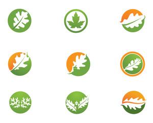 Leaf oak logo