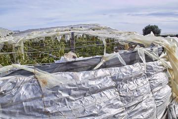 Plastic greenhouse, tattered