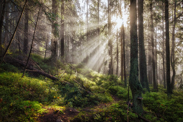 Old magical autumn forest with sun rays.