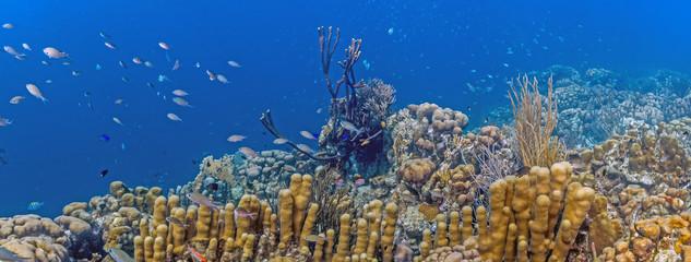 Aluminium Prints Under water coral reef