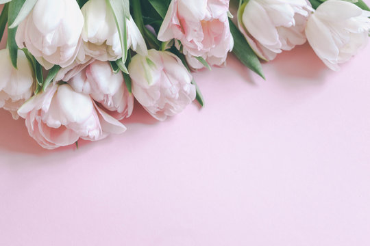 beautiful tulips on pink background