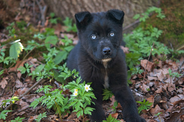 puppy in forest