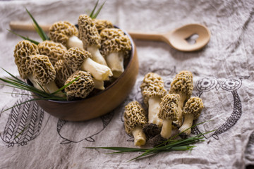 Fine cuisine Morchella esculenta, commonly known as common morel, morel, yellow morel, true morel, morel mushroom, and sponge morel