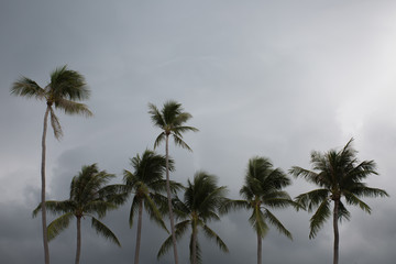 palms on the beach with cloudy sky