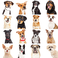 Multiple Crossbreed Dog Closeups