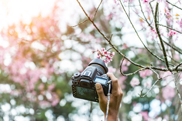 Young woman traveler photo by camera with sakura tree on vacation in japan