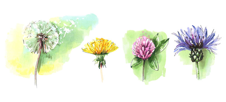 Watercolor floral elements set. Vintage wild flowers. Collection of colorful meadow flowers