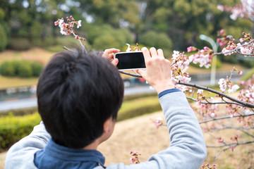 桜の写真をスマホで撮る男性