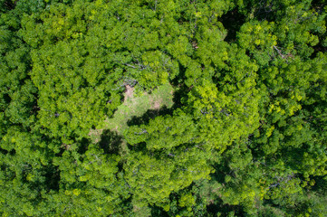 aerial view of forest landscape view from drone