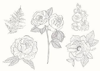 Flower set: highly detailed hand drawn