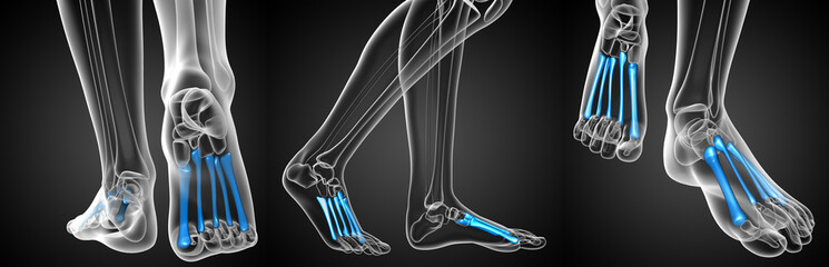 3d rendering medical illustration of the metatarsal bones