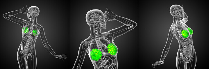 3d rendering medical illustration of the human breast