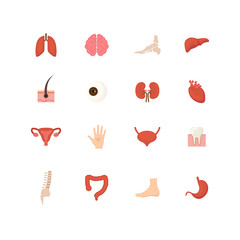 Cartoon Human Internal Organs Icons Set . Vector