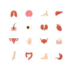 Cartoon Human Internal Organs Icons Set . Vector