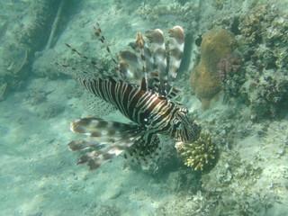coralli e pesci nel mare