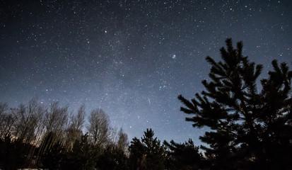 Winter night scene. Pine trees and stars.