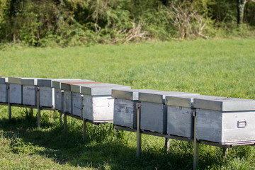TICINO PARK - APRIL 03: hives group dipped in a field, Ticino Park on April, 2017 in Lombardy, Italy