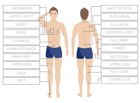 Laser hair removal male zones. Area body depilation Men. Front and back