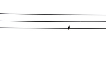 Image of a bird on electric wire.