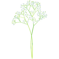 baby's breath - birth flower vector illustration in watercolor paint textures