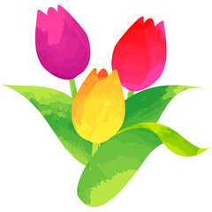 tulip - birth flower vector illustration in watercolor paint textures