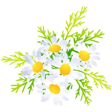 margaret - birth flower vector illustration in watercolor paint textures