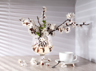 Tea and apricot flowers