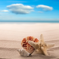 Sea shells and starfish on the beach of a tropical paradise island. Star fish summer vacation or holiday background with copy space...