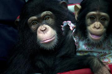 2 two monkeys