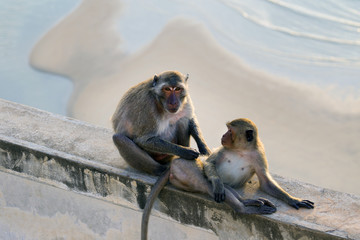 2 monkeys taking care with each other, mummy monkey