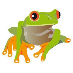 Frosch, Rotaugenlaubfrosch