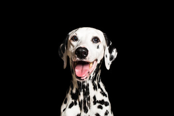 Dalmatian breathing with mouth