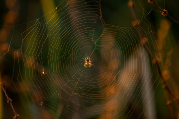 spider on canvas