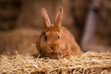Funny little rabbit among Easter eggs in velour grass,rabbits with Easter eggs,close-up pair of easter bunny,Cute rabbit small bunny domestic pet with long ears and fluffy fur coat