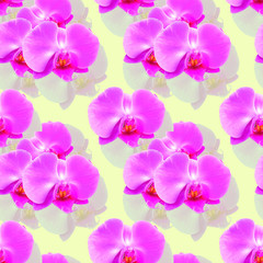 Orchid. Seamless pattern texture of flowers. Floral background, photo collage