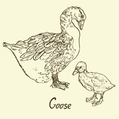 Goose and Gosling standing, Set, sketch in pop art style, isolated vector illustration