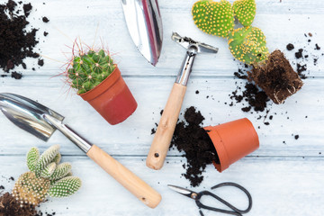 Gardening tools, flowers in pots and watering can on white wooden table. Spring in the garden concept background with free text space (top view, flat lay).