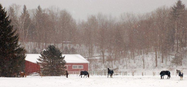 Horses in Winter Rural Farm Scene