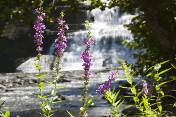 Beautiful summer flowers on a background of waterfall
